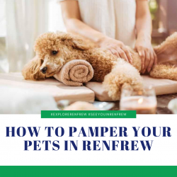 How to Pamper Your Pets in Renfrew